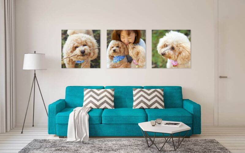 Pet Photography Prints