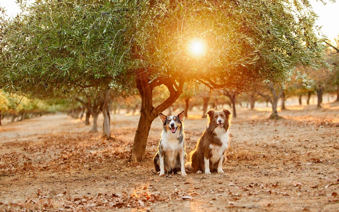 Pet Photography For Your Business