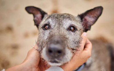 Dogs That Prefer Their Hoomans – Micky the Wolfhound